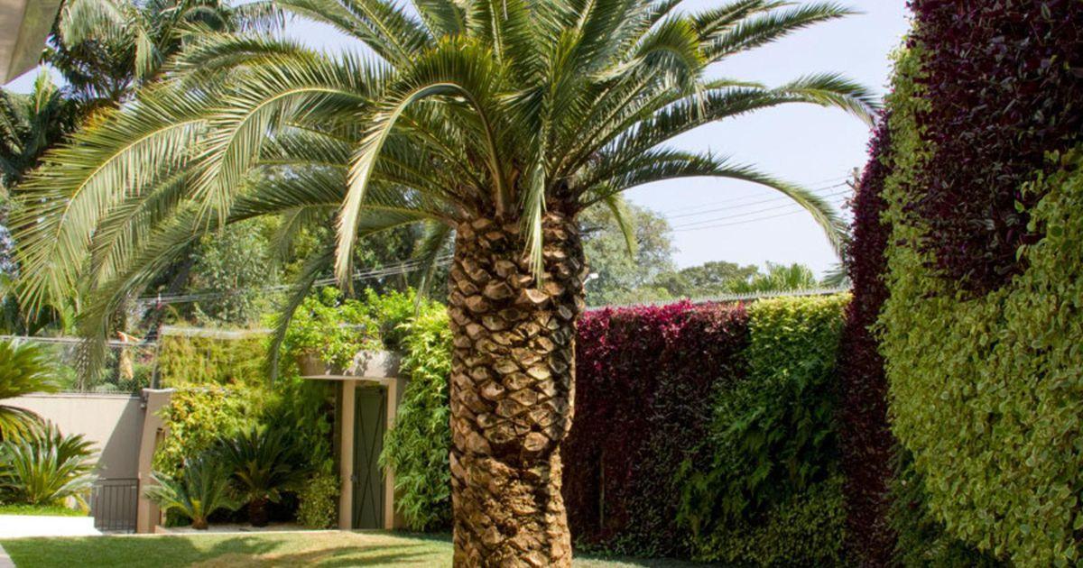 ?rea externa com jardim vertical de Gilberto Elkis ...